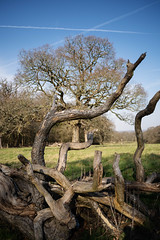 Hatchlands Park, Surrey (tonybill) Tags: february hatchlandspark nikkor28mmf28ais pentaxsmc50mmf12 sonya7iii sunshine surrey