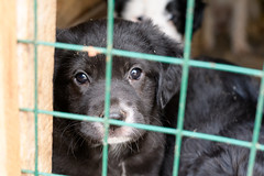 Puppy (petr.petrov) Tags: animal animals dog pet homeless puppy cute face sad shelter russia creature eyes