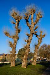 Old Friends (James_Beard) Tags: tree trees park blueskies grass fujixt2 dundonaldpark dundonaldrecreationground wimbledon london nature winter