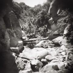 Devil's Gate (matt carroll with a camera) Tags: devilsgate holga toycamera pasadena jpl 120 120mm mediumformat california