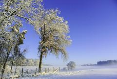 Sunny winter morning (Kat-i) Tags: winter schnee snow himmel sky bäume trees blau blue zaun fence natur nature outside nikon1v1 kati katharina 2019