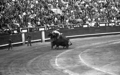 Picador 2 (Arne Kuilman) Tags: lostandfound zimmermans photos photonotmine scan v600 epson holiday found gevonden bullfighting bullfighter arena past even spain bull picador