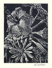 Hibiscus, day-lily, aster and unknown flower (Japanese Flower and Bird Art) Tags: flower chinese hibiscus sinensis malvaceae aster asteraceae daylily hemerocallis hemerocallidae sho kidokoro modern woodblock print japan japanese art readercollection