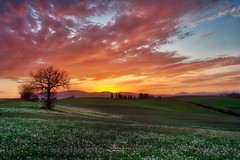 Sunset in Umbria (Andrea Rizzi photo) Tags: sunset umbria italy nature naturephotography landscape landscapephotography canoneos hdr rural ruralphotography colors colours tramonto winter tree campagna light beatifullight photography picture photo flickr flickrnature paesaggio photographer
