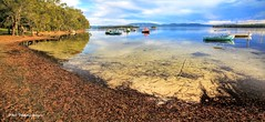 Fishing Boats on Wallis Lake at Green Point near Forster, NSW (Black Diamond Images) Tags: greatlakesnsw fishingboats wallislake greenpoint forster nsw midnorthcoast australia boats panorama msicepanorama msice msicestitch outdoor barringtoncoast
