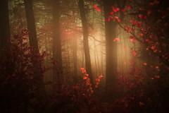 - (Julien Meyrat) Tags: forêt forest branches lumière park bois feuillage automne