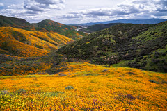 The Freeway and the Bloom (Kurt Lawson) Tags: 15 area bloom blooming california canyon conservation flowers freeway grass highway hills i15 interstate lakeelsinore mountains orange poppies purple super superbloom superlative walker wild wildflowers