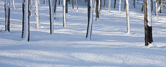 Troncs d'arbres (sosivov) Tags: sweden snow forest trees winter white shadows