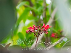 #arwphotography #casual #flowers #nature #elegant #beautiful (abdul.rahim.waqar) Tags: beautiful flowers nature casual arwphotography elegant