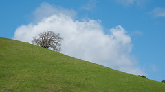 Big Cloud and Oak (lennycarl08) Tags: eastbay franklincanyon northerncalifornia