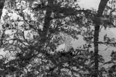 water (Hideki Iba) Tags: water river hyogo japan 2470 nikon d850 bw blackandwhite monochrome 白黒 黑白