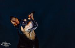 My name is Milka (Betrachtungsweisen) Tags: dog hundeportrait milka canon hundefotografie eos6d hund dogphotography mydog