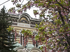 ribbons&blossoms_20190411 (h.m.a.t.s) Tags: bulgaria sofia plovdiv street streetphotography olympusomd omdem1markii streetlife