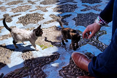 Moroccan Stray Kittens (180abroad) Tags: travel cats stray cute africa morocco animals kittens chefchaouen