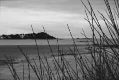 Tourists (walden.gothere) Tags: moonlight sea nikon nikond80 nikkor 1870mm bokeh bretagne brittany blackandwhite bw blackwhite black white nature