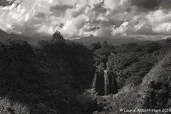 _DSF3089-Edit (Laurie2123) Tags: bnw hawaii honeymoon laurieabbotthartphotography laurieturnerphotography laurietakespics odc odc2019 ourdailychallenge blackandwhite monochrome monotone