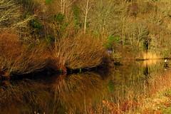 Calm winters day on the Crinan canal (alanpitman703) Tags: crinancanal crinan argyllandbute scotland