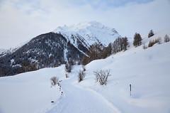 Winter Path (Simoniini) Tags: winter snow winterwonderland guarda bündnerland graubünden engadin switzerland swiss mountain alps