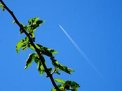 DSC02419 (omirou56) Tags: 43ratio green blue colors sky ουρανοσ μπλε πρασινο χρωματα