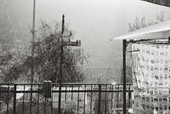 Pioggia e sole. Rain and sun.  Canon eos 3000v + Ilford delta 100 (paolapaoletta) Tags: canoneos3000v delta100 biancoenero blackandwhite pioggia rain