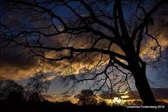 Baum in der Abendsonne (grafenhans) Tags: sony alpha 68 a68 alpha68 sigma 4056 1020 himmel wolken abendsonne abendhimmel abendlicht baum baumstamm baumkrone grafenwald bottrop nrw natur