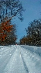 In the Winter Gr😞😒ve (Bob's Digital Eye 2) Tags: phone bobsdigitaleye2 bobsdigitaleye landscape winterinmn winter2019 winter snowscape snow driveway march2019 ice trees perspective converginglines flicker flickr laquintaessenza