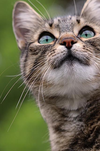 Pepper green eyes image