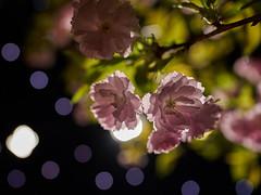 DSC01584 (ivoräber) Tags: flower flowers blossom spring sony switzerland schweiz swiss systemkamera suisse giardina garden garten