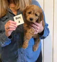 Lucy Jo Boy 4 1-19