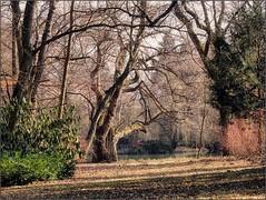 (Tölgyesi Kata) Tags: withcanonpowershota620 botanicalgarden vácrátót botanikuskert vácrátótibotanikuskert nemzetibotanikuskert winter tél tree