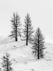 Nature's haircut (Bryan Esler Photo) Tags: tree white snow idaho gardenvalley winter cold mountain em1x olympus unitedstatesofamerica us