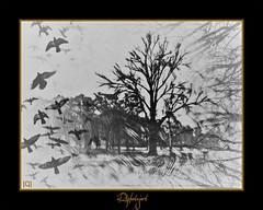 Life (aRtphotojart) Tags: life monocromatico tree landscape bw selective composicion
