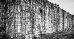 fortification (Fort Hancock, Sandy Hook, NJ.) (Steve Stanger) Tags: forthancock sandyhook historic history historical fort wall crusty blackandwhite bw blackwhite olympus olympusomdem10markii lumixg25mmf17 25mm prime primelens monmouthcounty nj newjersey jerseyshore shore mono monochrome abandoned decay