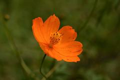 DSC_6725 (Hachimaki123) Tags: 所沢航空記念公園 tokorozawaaviationmemorialpark 日本 japan 所沢市 埼玉県 所沢 tokorozawa saitama 植物 花 plant planta flor flower