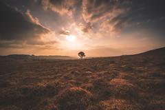 Lonely (adilemoigne) Tags: bretagne finistère mont darrée sunset landscape