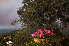 Aldeia de Dez - beiras, Portugal (Acyro) Tags: acyro portugal beira flores flower nature