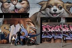 cat and dog (jhnmccrmck) Tags: graffiti kawaii dog cat melbourne fitzroy victoria xt1 xf1855mm classicchrome fujifilm fujifilmxt1 jhnmccrmck