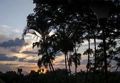 Se va el sol (johnmoralesh) Tags: sun summer sunset shadows sombras naturaleza nature contraste colombia pereira contrastes arbol arboles tree palmeras paisaje landscape background 35 35mm nikon newphotographer photography