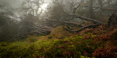 A Roaches lie down (PentlandPirate of the North) Tags: theroaches woods aforest storm gale trees staffordshire mist fog christmasday peakdistrict magical atmospheric breathtakinglandscapes