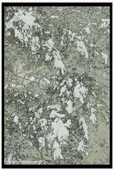 Snow in the tree (James0806) Tags: washington dc usa us