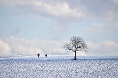 Nature de l'hiver (Excalibur67) Tags: nikon d750 sigma globalvision contemporary 100400f563dgoshsmc paysage landscape ciel cloud sky nature nuages neige snow arbre tree