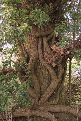 {Tree Hug}FCC155