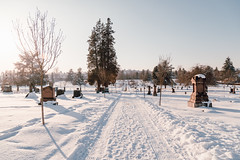 Vancouver-Winter-Walks-17 (_futurelandscapes_) Tags: vancouver winter snow cold february mountainview cemetery trees arboretum sunset evening graves sunny blue white vintage