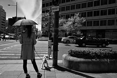 長堀橋/大阪 (nagacchi13) Tags: grⅲ ricoh osaka japan monochrome blackandwhite streetsnap streetphotgraphy street