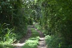Início da Trilha (mcvmjr1971) Tags: nikon d800e mmoraes lens sigma 85mm f14 art niteroi brasil 2018 trilha bairro vila progresso morro do cantagalo