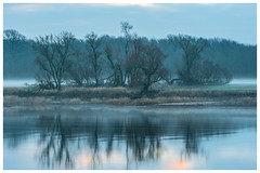 River Elbe in the morning (nickyt739) Tags: river elbe morning germany coswig wittenberg reflection mirror water wet tree trees winter leaves fog mist misty foggy nikon dslr d750 fx sunrise dramatic moody calm deutschland sky clouds landscape nature