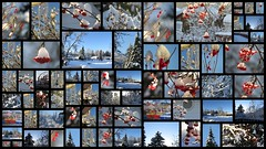 A sunny winter day (diffuse) Tags: picasa3 picasa collage sunny bluesky berries mountainash cranberries highbushcranberry icicles snow trees jigsaw boats