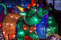 NC Chinese Lantern Festival (TDog54Photography / TCS Photography) Tags: cary lantern festival nc north carolina booth amphitheatre regency parkway koka triangle event photography light lights lighted 2018
