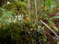 lichen-landscape-308 (jmunt) Tags: lichen microlandscape mushroom landscape