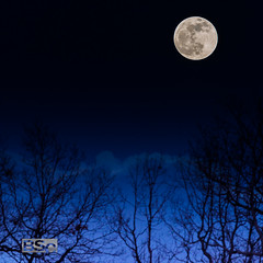 Super Moonrise-5755.jpg (bryanstewartcreative) Tags: bryanstewartcreative moon supermoon super brilliant vibrant superwolfbloodmoon eclipse night nightsky sky darkness dark nikon nikond750 d750 nature naturephotography nightphotography full fullmoon bloodmooneclipse trees silhouette frame composition michigan southeastmichigan detroit michigannature puremichigan naturalmichigan thegreatlakesstate michiganders puremichiganders michiganawesome awesomemitten michiganatnight